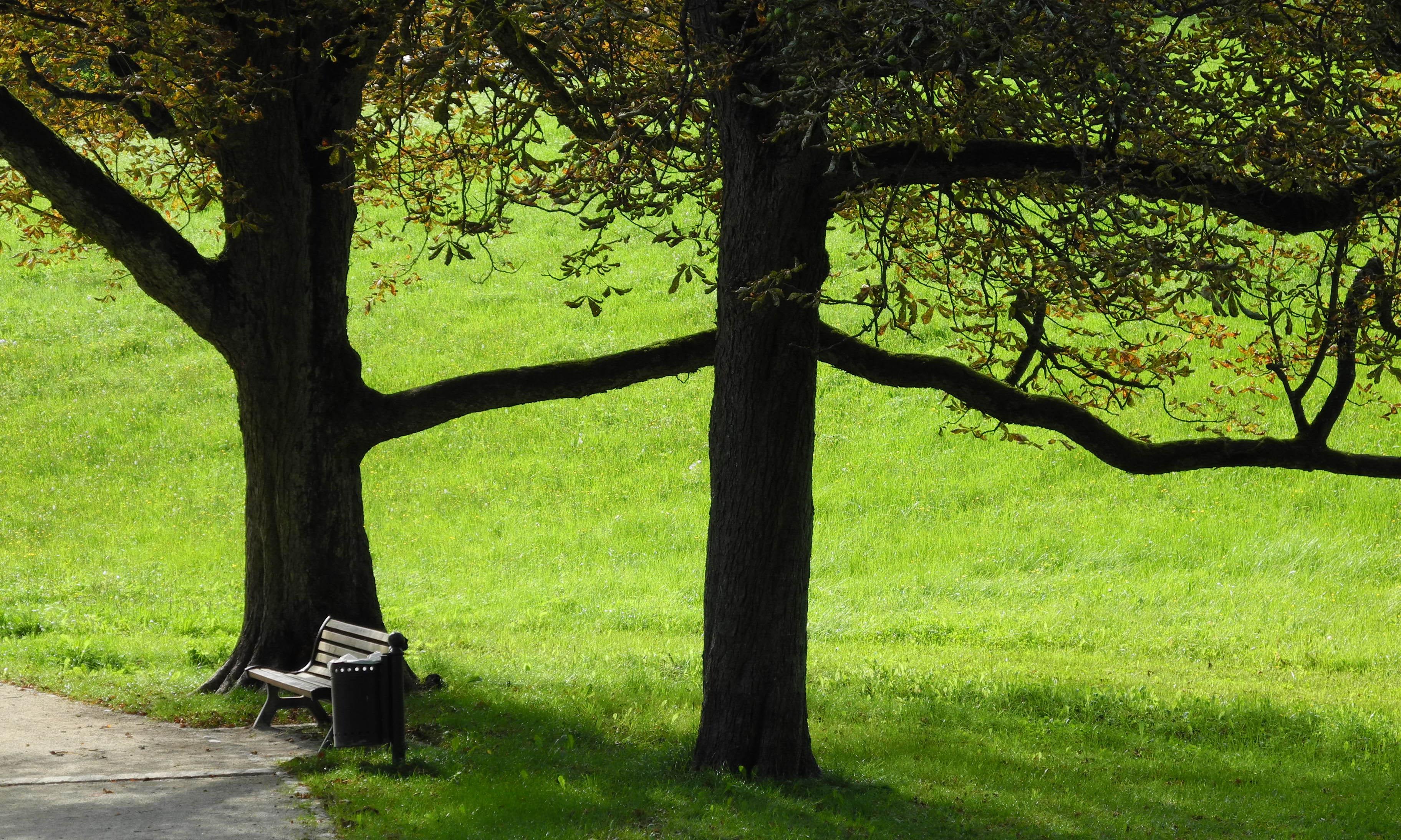 Parkbank im Hofgarten